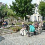 Anes au repos dans village bretons