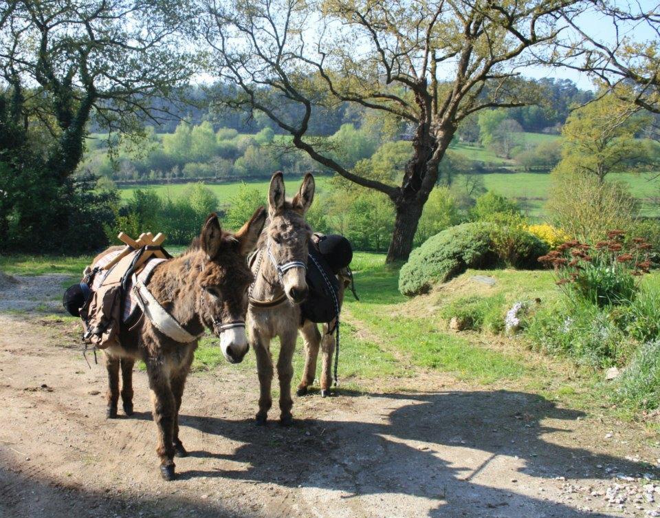 Les ânes VOYOU et LANCELOT prêts pour le départ