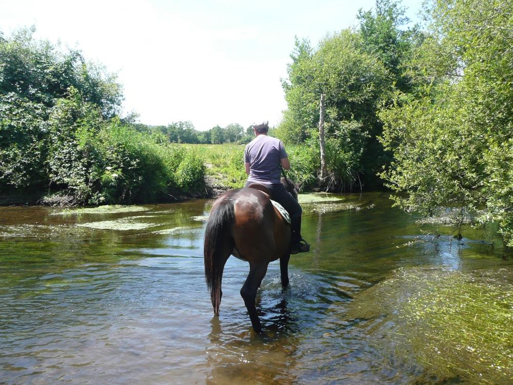baignade-cheval-riviere-bretagne