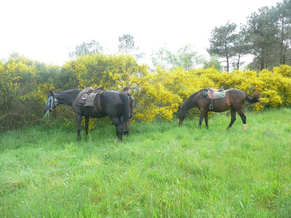 cavalier-cheval-etape-morbihan
