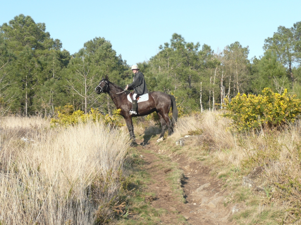 cheval-balade-gite-bretagne