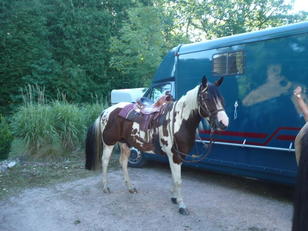 cheval-van-gite-morbihan