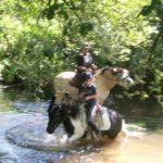 chevaux-balade-riviere