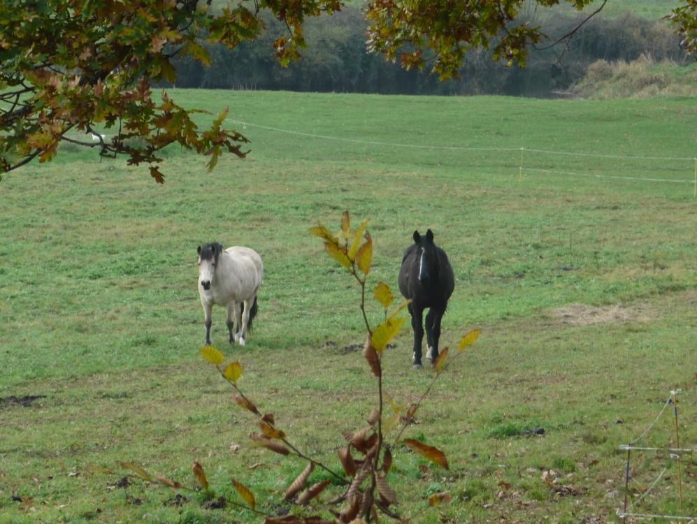 chevaux-prairie-etape-cavalier