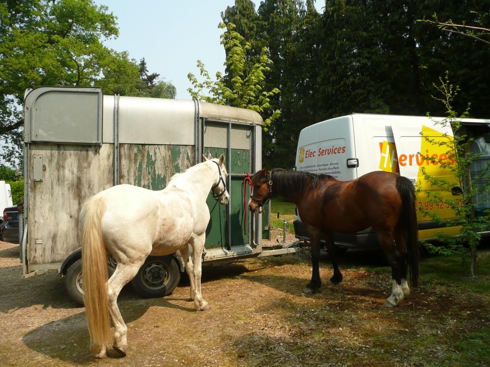 chevaux-van-gite-etape