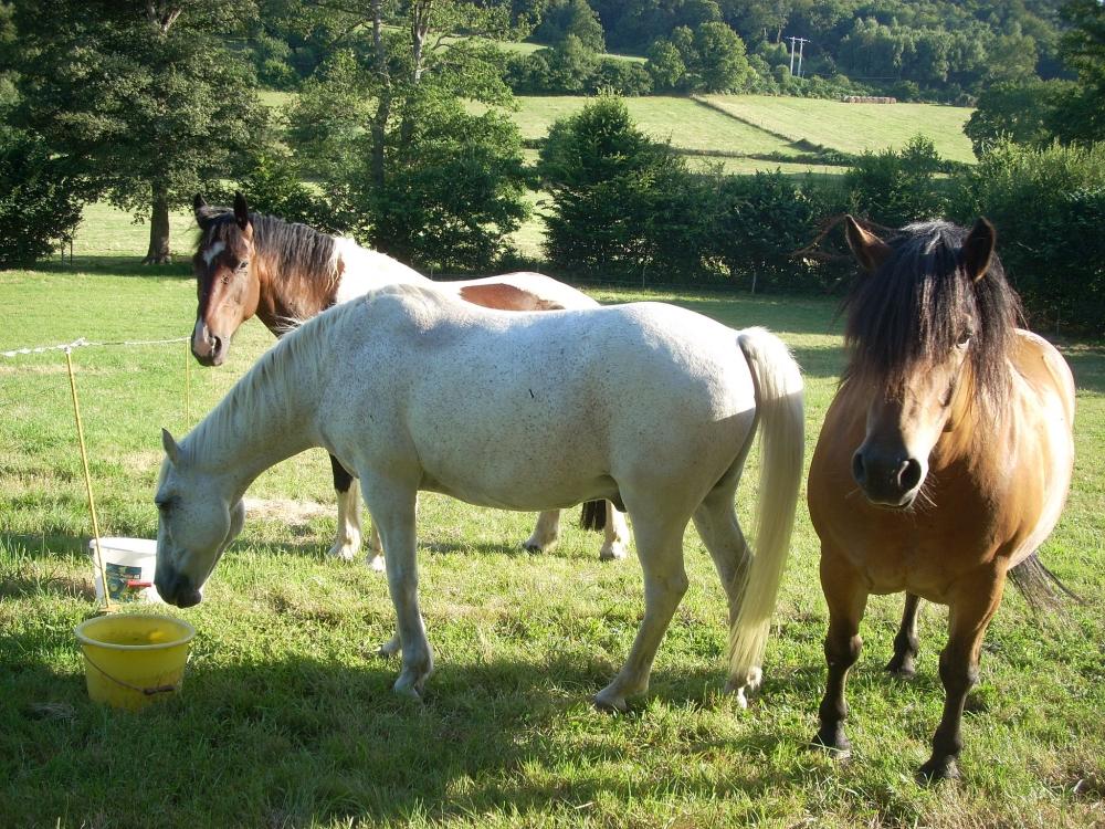etape-chevaux-aux-pres