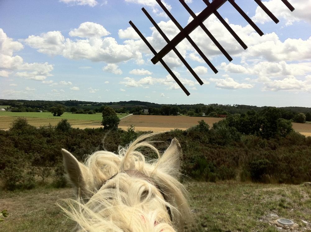 gite-equestre-champ-bretagne