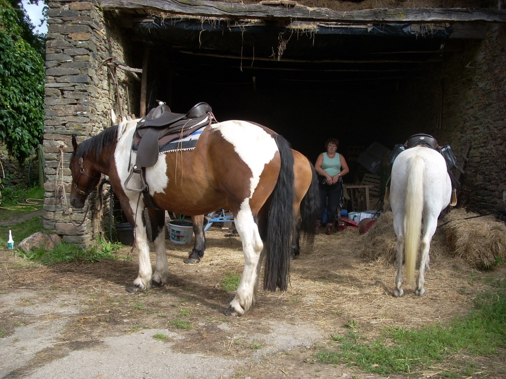 gite-equestre-preparation-balade