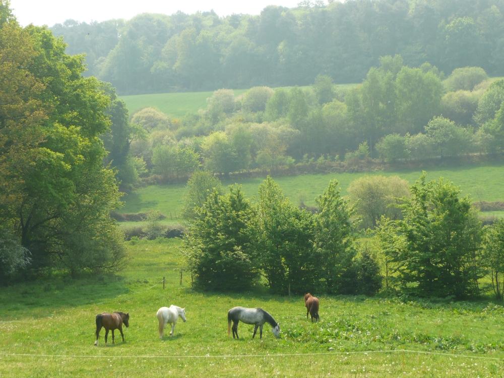prairie-chevaux-gite-etape