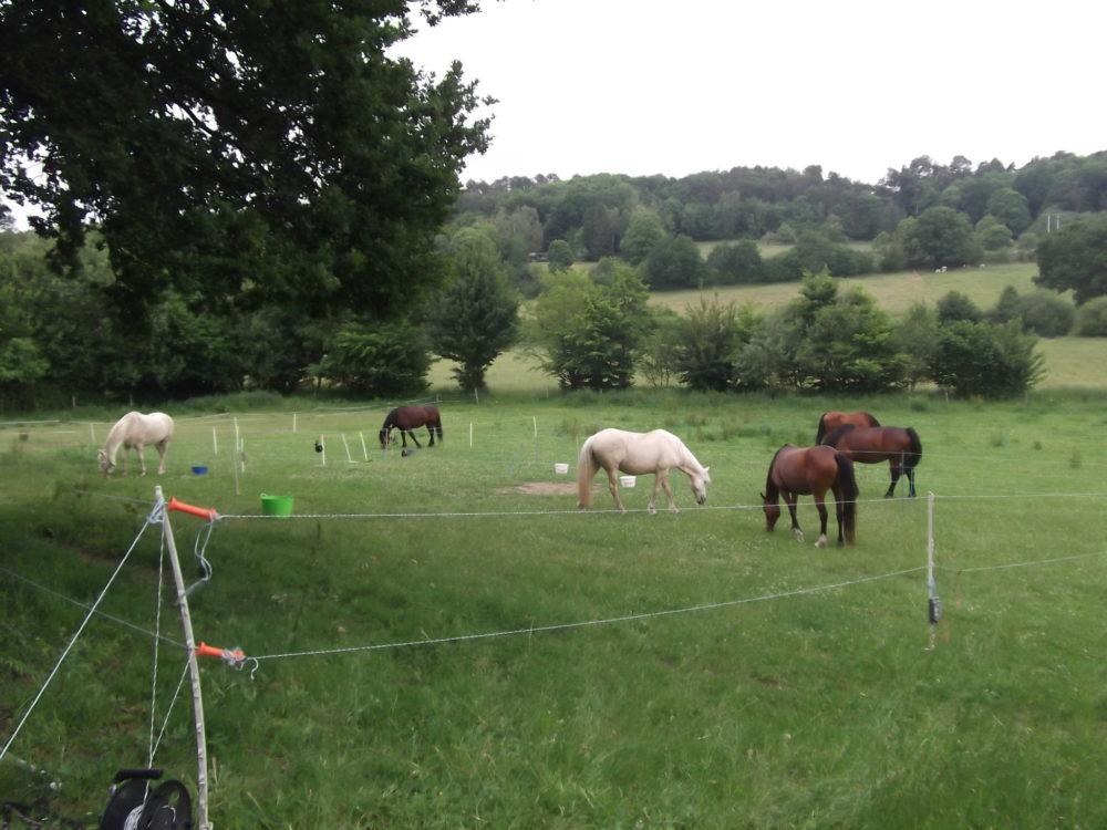 chevaux en prairie gite du vaugrenerd